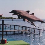 Flying dolphins, Cartagena, Colombia. Photo by Demetrios Kastaris.