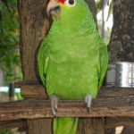 Costa Rican Zoo, Central America, December 2013, Photo by Demetrios Kastaris.