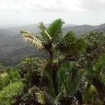Puerto Rico, El Yunque, July, 2015, photo credit, Demetrios Kastaris.