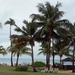 Puerto Rico, palm trees, July, 2015, photo credit, Demetrios Kastaris.